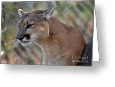 A Cougar In Deep Thought Greeting Card