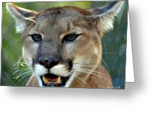 A Cougars Face Greeting Card