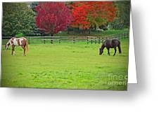 A Couple Horses And Beautiful Autumn Trees Greeting Card