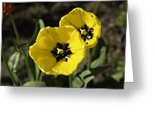 A Couple Of Bright Yellow Tulip Flowers Greeting Card
