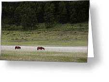 A Couple Of Horses Standing Greeting Card