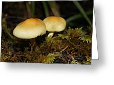 A Couple Of Mushrooms Greeting Card