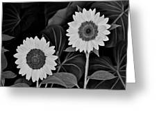 A Couple Of Sunflowers. Greeting Card
