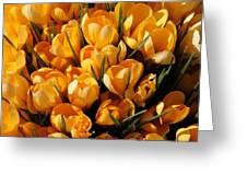 A Crowd Of Crocuses Greeting Card