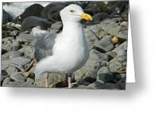 A Curious Seagull Greeting Card