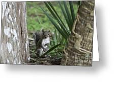 A Curious Squirrel Greeting Card