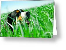 A Cute Dog In The Grass Greeting Card