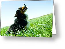A Cute Dog On The Field Greeting Card