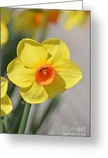 A Daffodil Hello Greeting Card