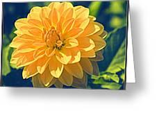 A Dahlia In Autumn Greeting Card