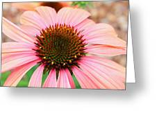 A Daisy For You Greeting Card