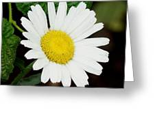 A Daisy If You-do Greeting Card
