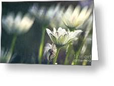 A Day In August Greeting Card