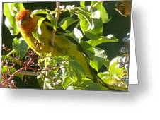 A Day With Mr. Tanager 13 Greeting Card