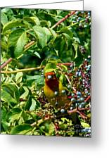 A Day With Mr. Tanager 2 Greeting Card