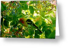 A Day With Mr. Tanager 7 Greeting Card