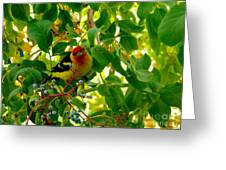 A Day With Mr. Tanager 9 Greeting Card