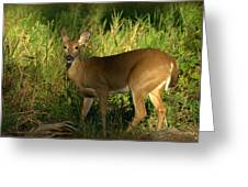 A Dear Deer Landscape Greeting Card