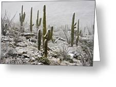 A Desert Blizzard  Greeting Card by Saija  Lehtonen