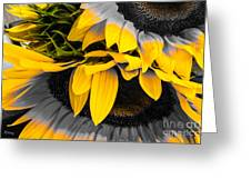 A Different Kind Of Sunflower Greeting Card