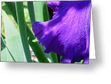 A Dip Of Purple Greeting Card