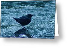 A Dipper On A Rock Greeting Card