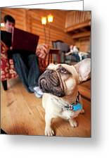 A Dog Stands At The Feet Of Its Owner Greeting Card