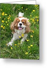 A Dog's Buttercup Heaven Greeting Card by Jo Collins