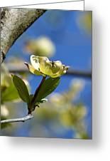 A Dogwood Blossom Greeting Card