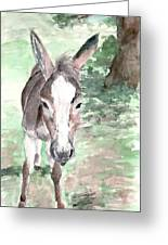 A Donkey Day Greeting Card