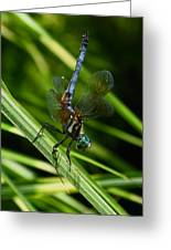 A Dragonfly Greeting Card