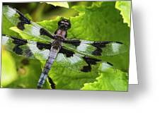 A Dragonfly Warms Up In A Vegetable Greeting Card