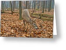 A Eight Point Buck 1261 Greeting Card