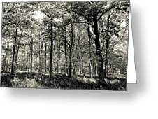 A English Forest Greeting Card