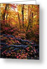 A Fall Forest  Greeting Card