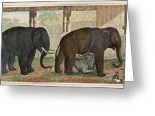 A Family Of Indian Elephants Greeting Card
