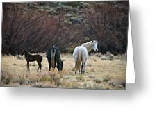 A Family Of Three - Wild Horses - Green Mountain - Wyoming Greeting Card