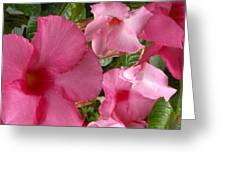 A Family Of Tropical Flowers Greeting Card
