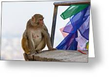 A Female Macaque On Top Of Wall Greeting Card