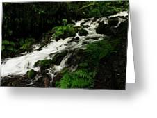 A Fern On An Isalnd  On Wahkeena Creek Greeting Card