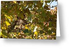 A Few Grapes Left For The Birds Greeting Card