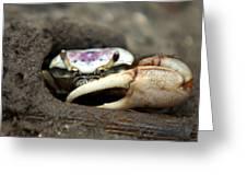 A Fiddler Crab Around Hilton Head Island Greeting Card