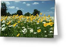 A Field Of Spring Greeting Card