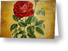 A Fifth Vintage Rose Greeting Card
