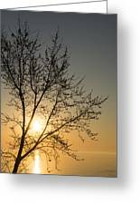 A Filigree Of Branches Framing The Sunrise Greeting Card