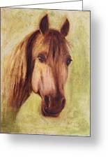 A Fine Horse Greeting Card