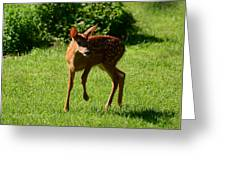 A Fine Little Fawn Greeting Card by Lori Tambakis