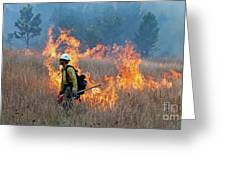 A Firefighter Ignites The Norbeck Prescribed Fire. Greeting Card