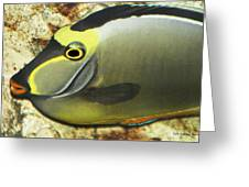A Fish From The Ocean Greeting Card