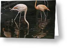 A Flamingo With Its Head Under Water In The Jurong Bird Park Greeting Card
